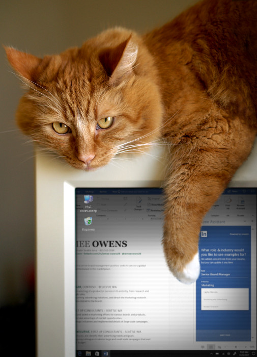 Kitty loves the new Resume Assistant in Word
